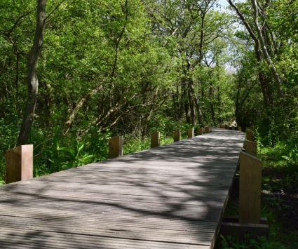 aménagement en bois dans le chemin des dunes de slack 2