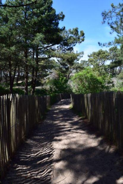 canisses dans le chemin des dunes de slack