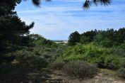point de vue depuis l'orée de la pinéde dans le chemin des dunes de slack