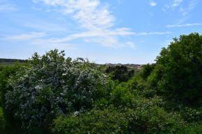 végétation dans le chemin des dunes de slack