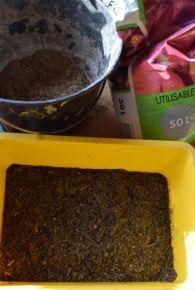 Préparer un mélange terreau et sable 50/50.