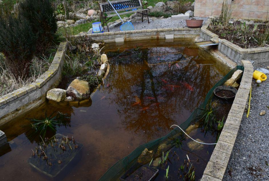 Le bassin poissons rouges for Bassin pour poisson rouge