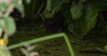 Maman cachée sous les arums