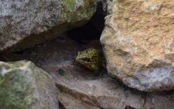 Bien cachée dans les pierres.