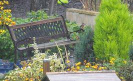Martin femelle sur le banc.
