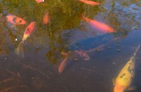 quelques poissons