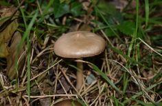 champignon 4