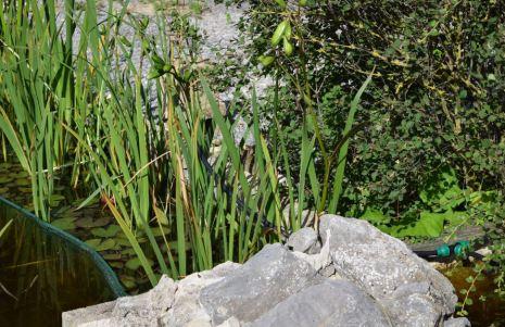 Jeune lapin camouflé près du bassin