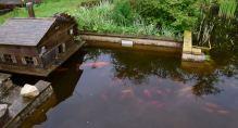 les poissons sortent de leur abri