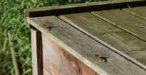 libellules sur le pont d'envol
