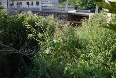 Vue de la berge près du pont.