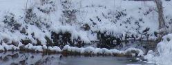 arums sous la neige