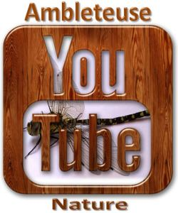 ambleteuse nature youtube logo