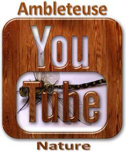 ambleteuse nature youtube logo