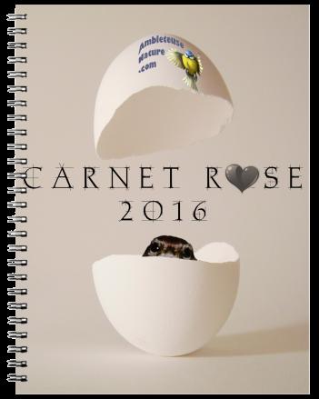 CARNET ROSE1