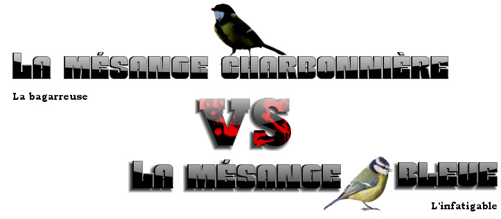 mésanges vs