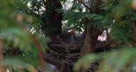 merlette dans son nid