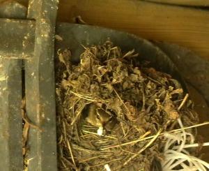 nettoyage du nid